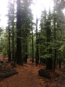 The Tahoe Rim Trail intersects with Granlibakken property.