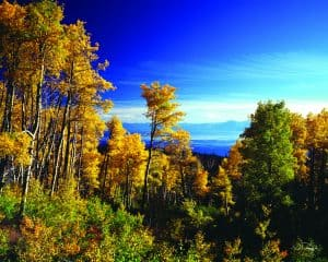 Lake Tahoe Scenic Fall Colors on Aspens - Granlibakken